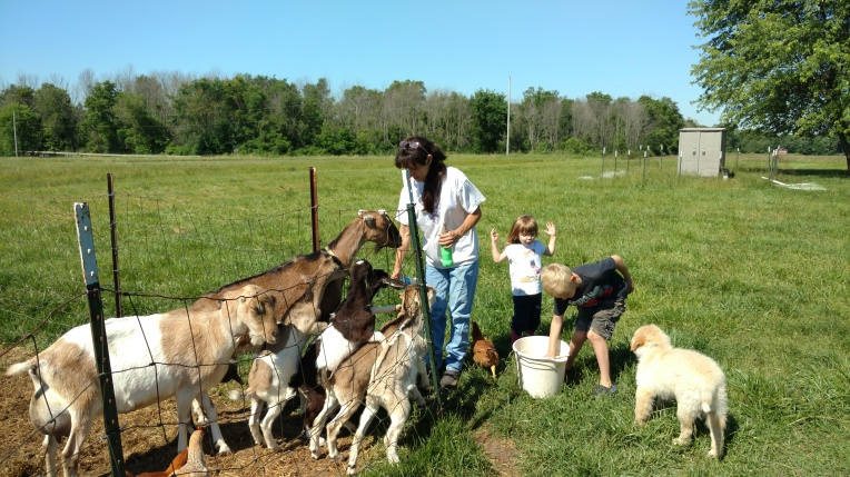 Goat kids enjoy their milk at Terre Verde Farm
